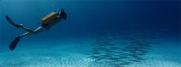 Paysages et photos sous-marines sont particulièrement soignés. - photo Wild Bunch