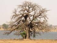 cinecicleta-Burkina-Fasso (48)