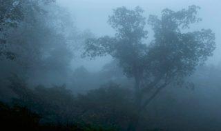 【画像】映画『アルビノの木』場面カット