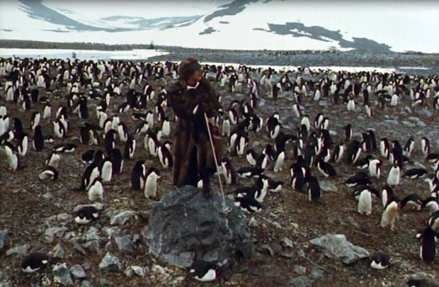 Mr Forbush and the penguins (1971)