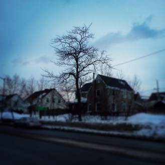 I just love trees. :D