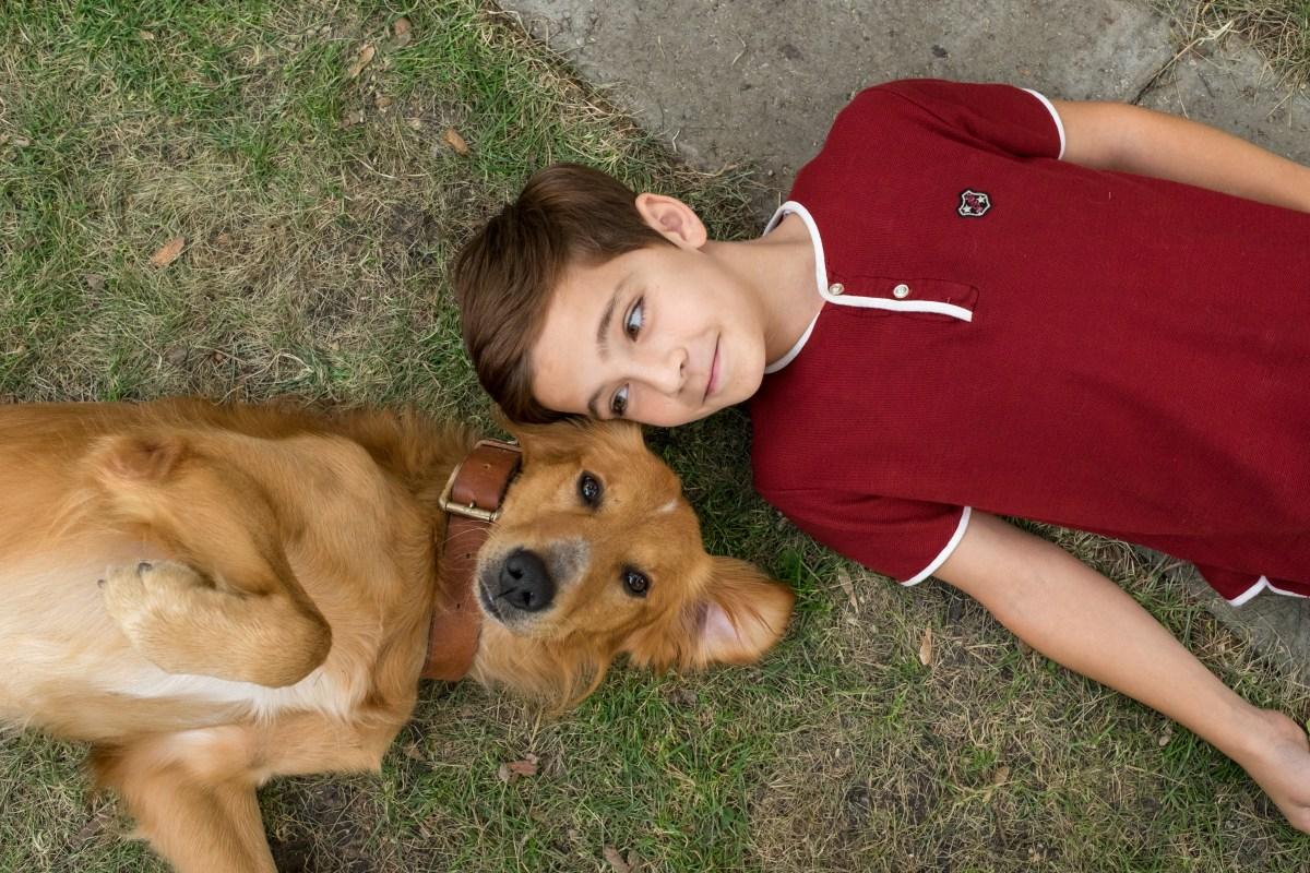 ¿De qué trata 'La razón de estar contigo' (A Dog's Purpose) con Dennis Quaid? | Tráiler, póster y sinopsis