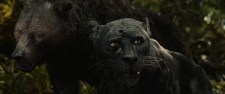 "Bagheera in the Netflix film ""Mowgli: Legend of the Jungle"""
