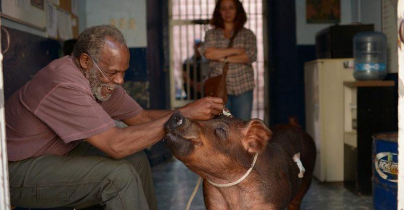 Still de Mr. Pig