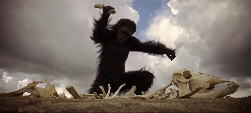 macaco-com-arma