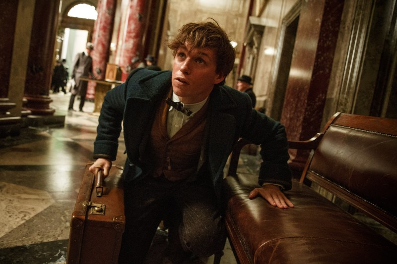 fantastic-beasts-and-where-to-find-them-pictures