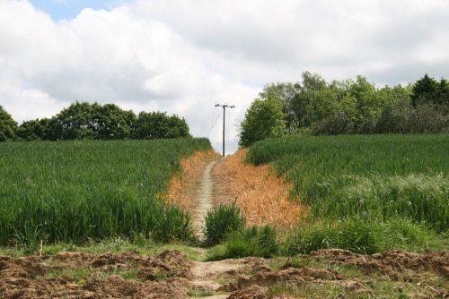 Ciney utilisera des pesticides jusqu'en 2019