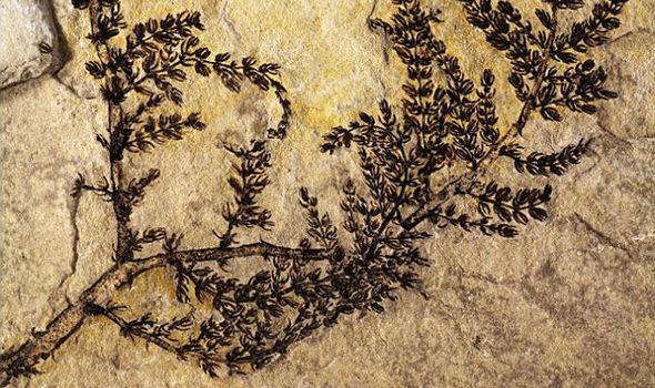 Montsechia sería la primera flor del mundo