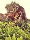 The eco-tree house