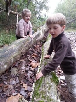 Exploring log decay.