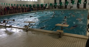 Swimming Semifinal Round, veteran swimmers, 2-0