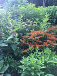 The butterfly garden.