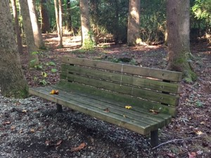 Sunday Bench