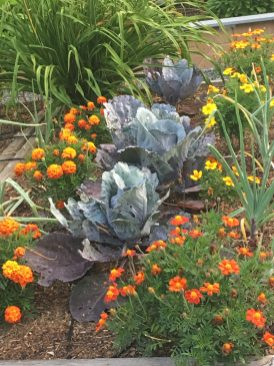 Vegetable garden with companion planting
