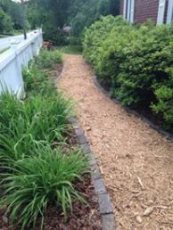 Right after path installed and azaleas sheared. First year.