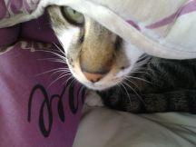 Gato no edredom - Hidden kitty