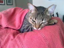 Gato fofo dormindo - Cute kitten sleeping