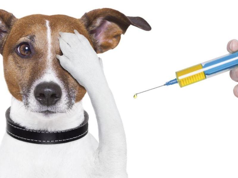 vaccinatie hond kat