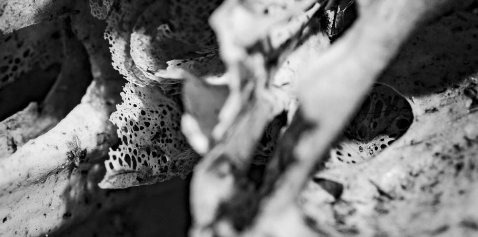 artiste en exposition galerie circezaar sebastien picque rouen