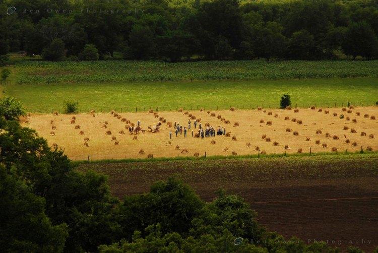 Oat-Harvest