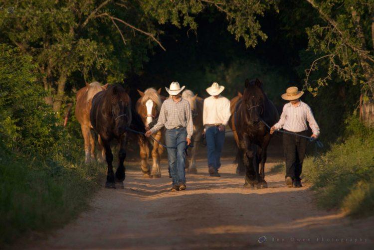 Gathering the Horses