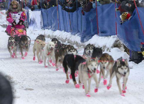 DeeDee Jonrowe 2015 Iditarod