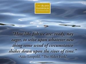 Aldo quote