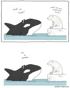 Orcas lie