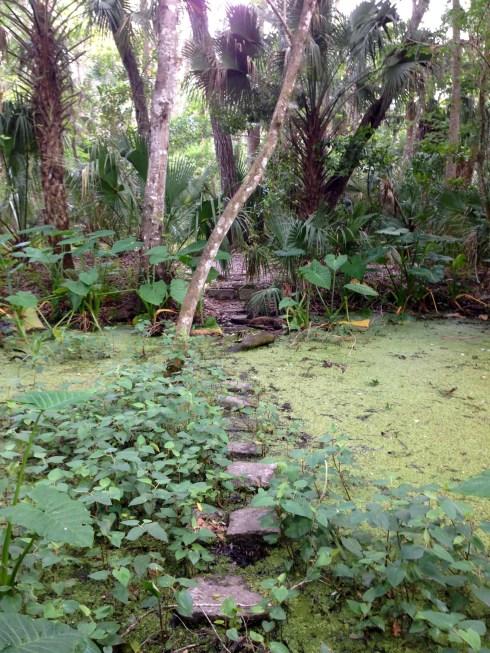 Fern Garden Trail