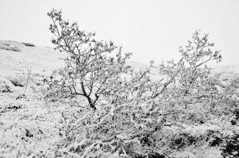 Denali Snow