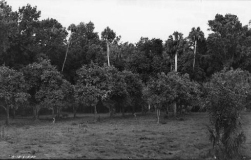 Grove 1948