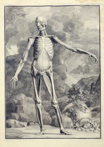 a figure displaying the inner musculature of the front of the body stands akimbo in front of a landscape of rocks, plants, and a broken urn
