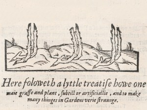 An illustration of cut twigs heeled into the ground.