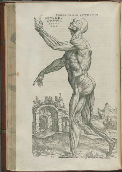 Illustration from Vesalius's De Fabrica showing a body posed as though dancing, muscles exposed.
