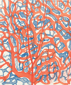 A drawing of a section of a rabbit's olfactory tissue showing its blood vessels in red and lymph ducts in blue.