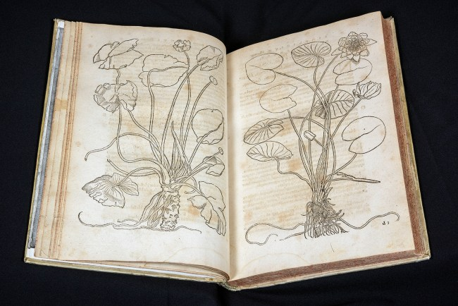 An open book showing two botanical line drawings.