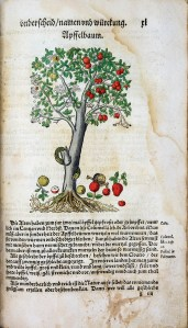 A hand colored print of an apple tree, a snake is coming out of a broken branch while a skul and bone sits among ripe apples at the roots.