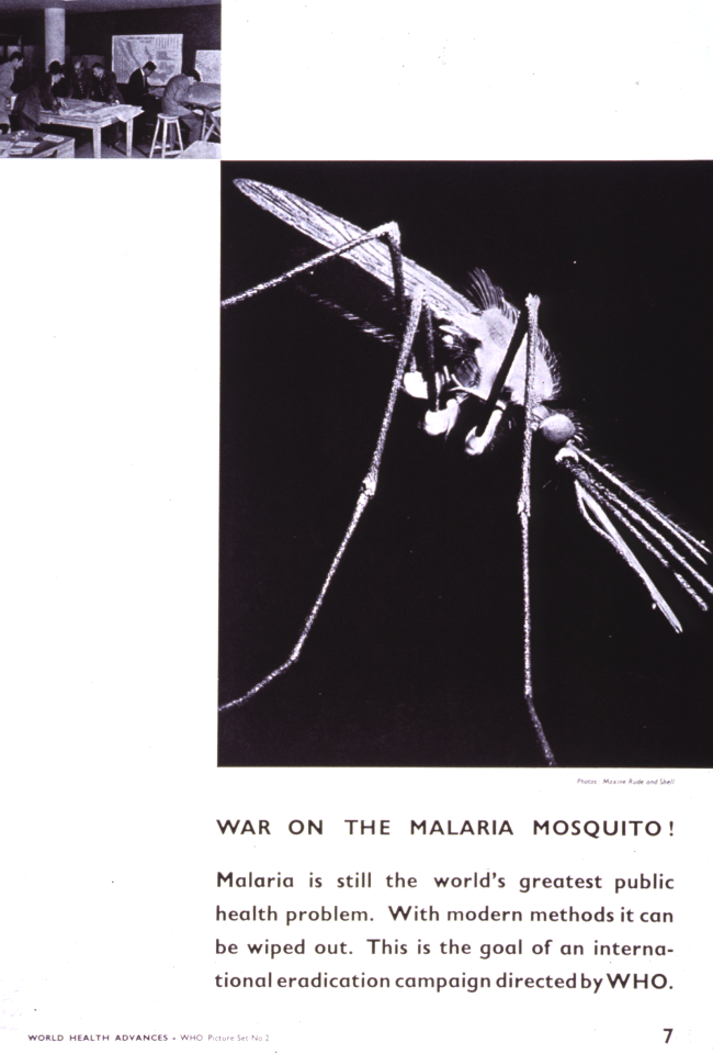 A poster from the World Health Organization featuring a photograph of the malaria mosquito