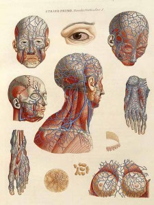 Intricate highly colored medical illustrations of the circulatory system of the human head.