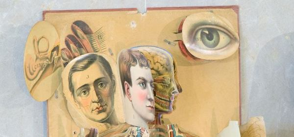 A detail of the head of a lifesized anatomical chart of layers of printed cardboard.