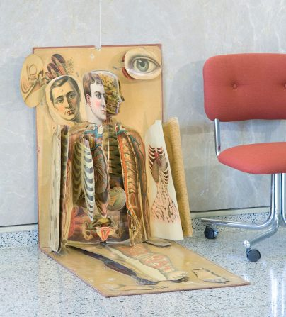 A lifesized layered cardboard anatomical chart propped in a sitting position.