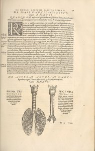 A woodcut of the lungs and trachea on a page of Latin text.