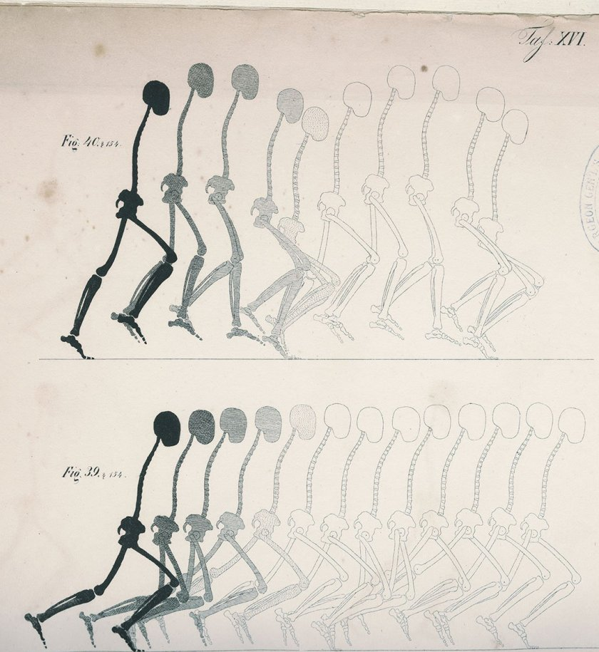 Overlaid drawings of the human skeleton showing the movements of walking and running.