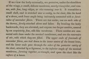 Text describing the musculature and structures that are used for generating sounds.