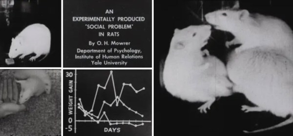 Collage of film stills featuring rats and data.