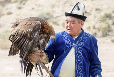 The traditions are still very much alive. This eagle hunter shows of his skills and the eagle is treated on a piece of meat for himself.