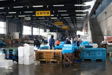 In one of the warehouses the fishes are sorted on size and quality.