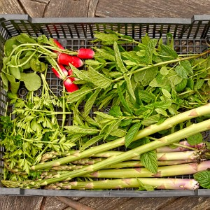 herbs, asparagus and radishes