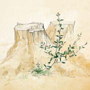 Оливковый росток