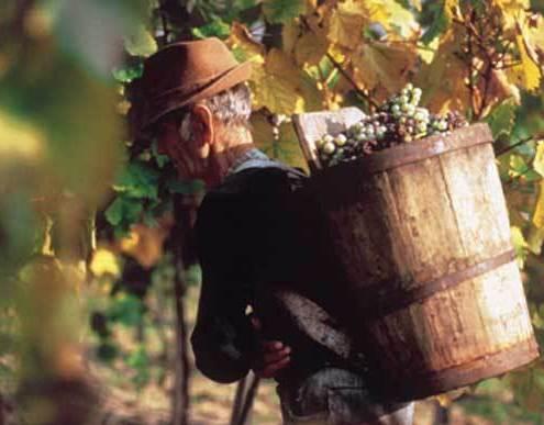 Винодел